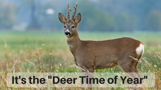 "It's the ""Deer Time of Year"""
